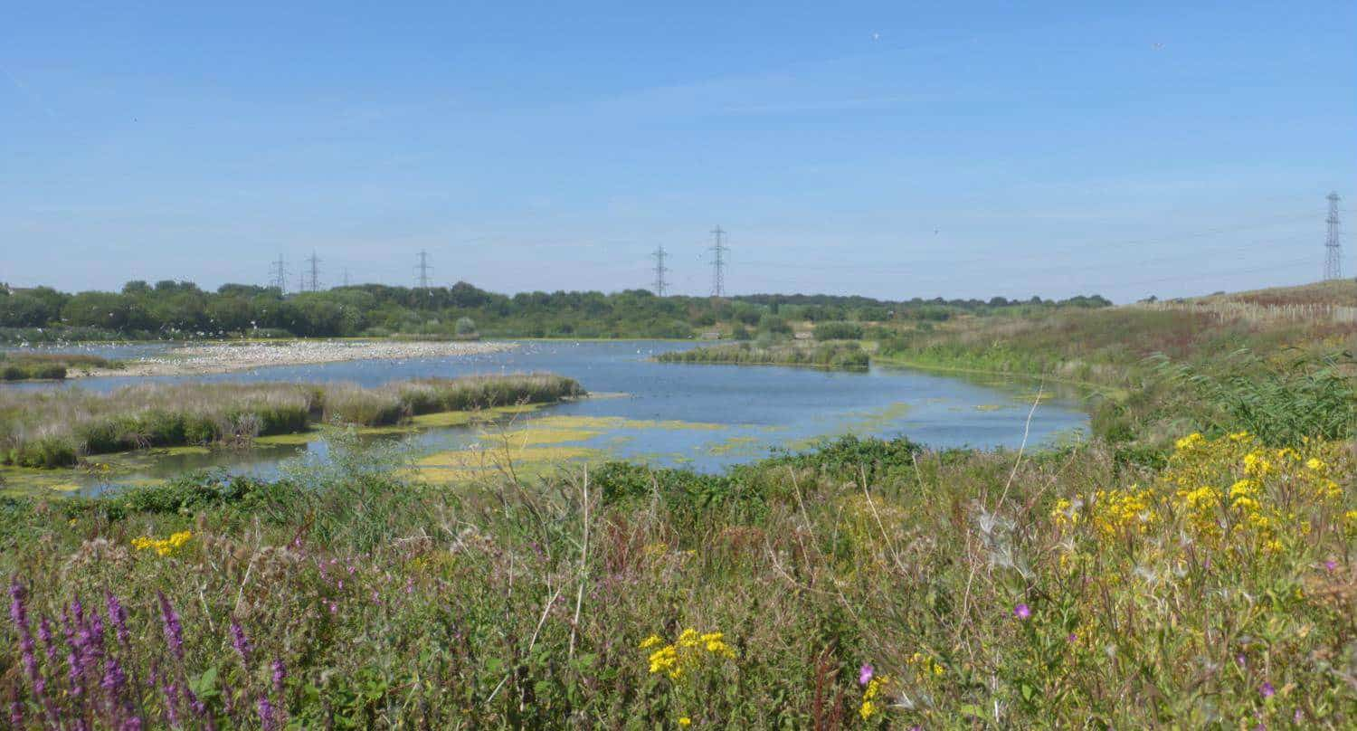 Report back on Beddington Farmlands - Sutton Council tells Viridor